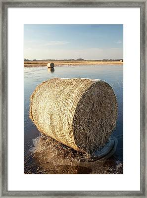 Straw Bales On A Flooded Field Framed Print by Ashley Cooper