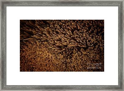 Straw Framed Print by Jolanta Meskauskiene