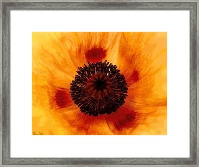 Straw Poppy Framed Print
