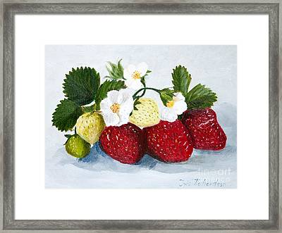Strawberries With Blossoms Framed Print by Iris Richardson
