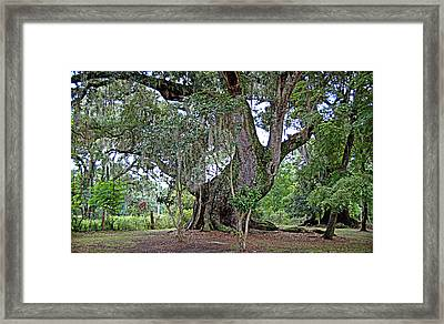 Framed Print featuring the photograph Strawberry Chapel Oak by Linda Brown
