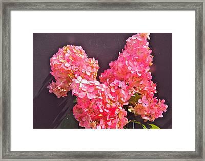 Strawberry Cream Framed Print by Randy Rosenberger