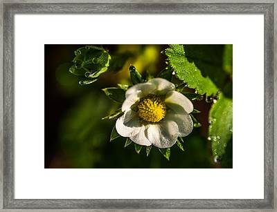Strawberry Flower. Small Natural Wonders Framed Print by Jenny Rainbow