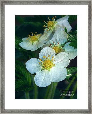 Strawberry Flowers Framed Print by AmaS Art