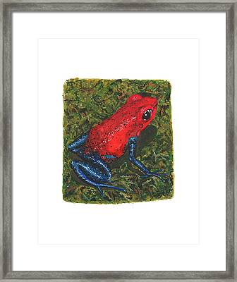 Strawberry Poison Dart Frog Framed Print by Cindy Hitchcock