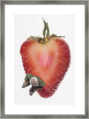 Strawberry Seat Framed Print