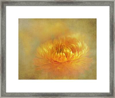 Strawflower IIi With Textures Framed Print by David and Carol Kelly