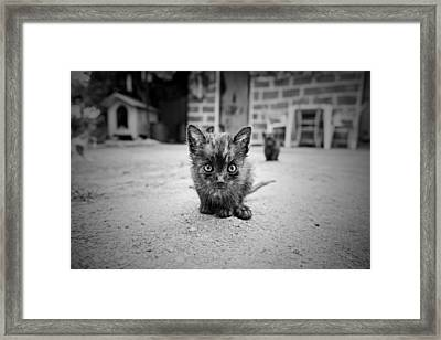 Framed Print featuring the photograph Stray Cat #1 by Antonio Jorge Nunes