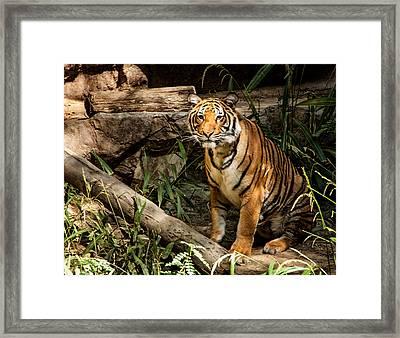 Stray Cat Framed Print by Jon Berghoff