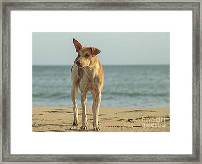 Stray Dog On The Beach Framed Print by Patricia Hofmeester