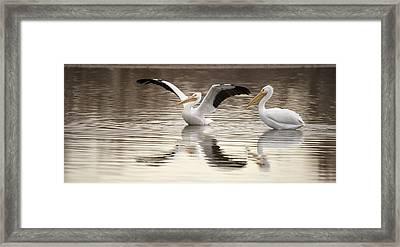 Streaching Its Wings  Framed Print