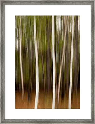 Streaky Trees At Mackenzie King Estate Framed Print