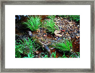 Framed Print featuring the photograph Stream By The Trail by Ludwig Keck