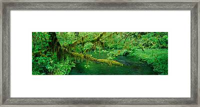 Stream Flowing Through A Rainforest Framed Print