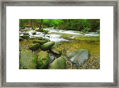 Stream Following Through A Forest Framed Print by Panoramic Images