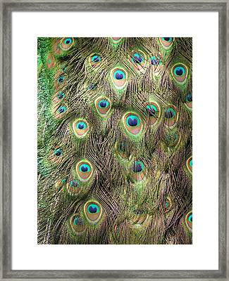 Framed Print featuring the photograph Stream Of Eyes by Diane Alexander