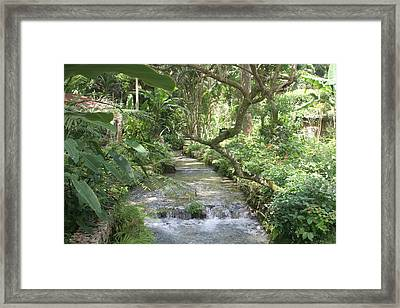 Stream Of Life Framed Print by Dervent Wiltshire