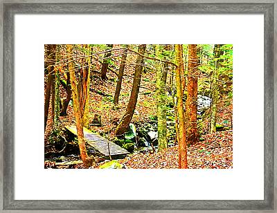 Stream On Appalachian Trail Framed Print