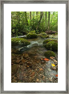 Framed Print featuring the photograph Stream With The Color Of Early Fall. by Debbie Green
