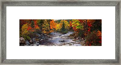 Stream With Trees In A Forest Framed Print by Panoramic Images