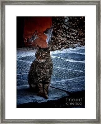 Street Cat Framed Print by Karen Lewis