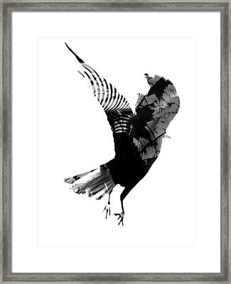Street Crow Framed Print by Jerry Cordeiro