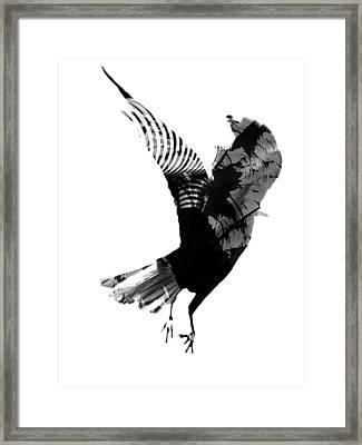 Street Crow Framed Print