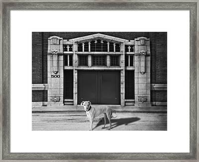 Street Dog Framed Print by Larry Butterworth