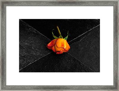 Framed Print featuring the photograph Street Rose by Marwan Khoury