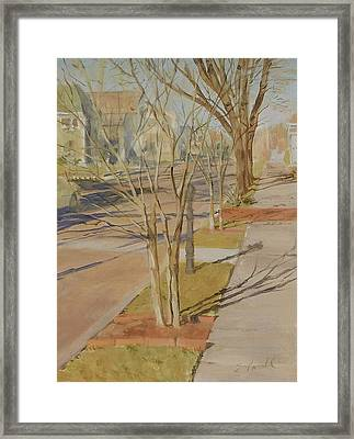 Street Trees With Winter Shadows Framed Print