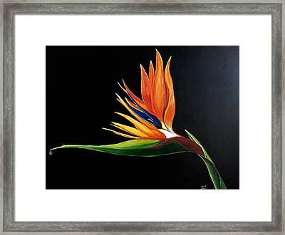 Strelitzia - Bird Of Paradise . Framed Print by Aarti Bartake