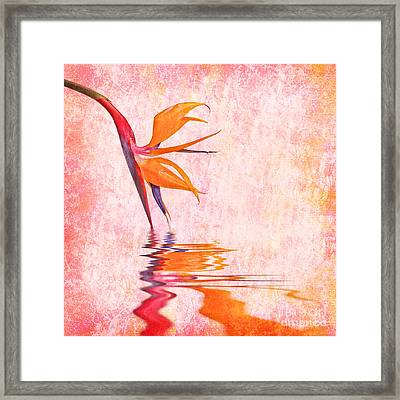 Strelitzia Framed Print by Delphimages Photo Creations