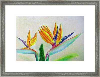Strelitzia - Together Framed Print by Zina Stromberg