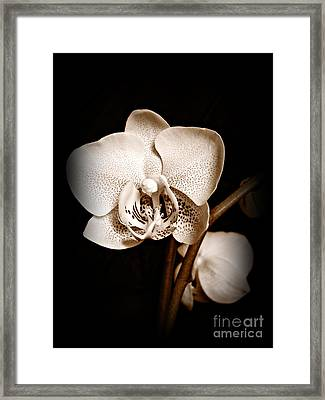 Strength And Beauty Sepia Framed Print by Chalet Roome-Rigdon