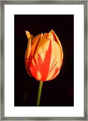 Strength Of A Flower Framed Print by Jonathan Michael Bowman