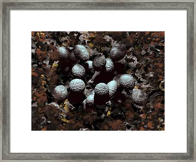 Streptococcus Pyogenes Bacteria Framed Print