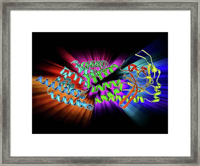 Stress-responsive Activator Protein Framed Print by Laguna Design