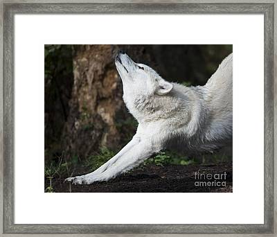 Stretch Framed Print by Mike Dawson