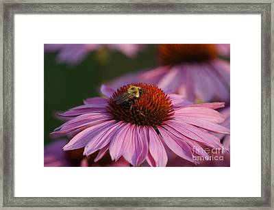 Stretch Time Framed Print