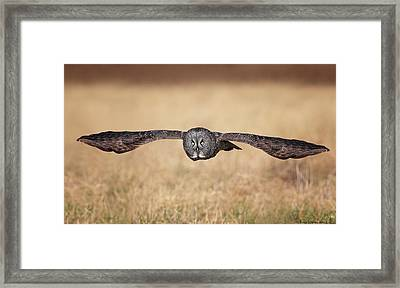 Stretched Out Framed Print by Daniel Behm