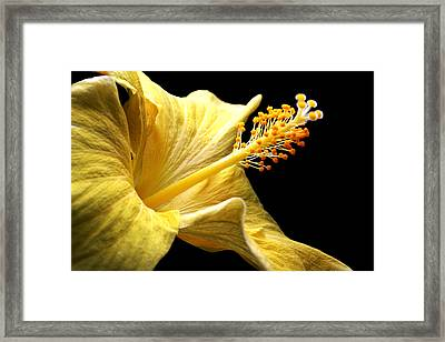 Stretcher Framed Print