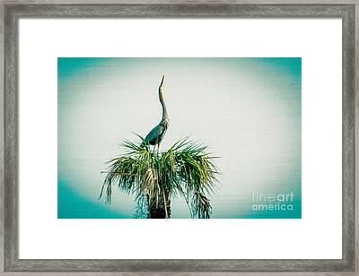 Stretching Heron Framed Print by Bob and Nancy Kendrick