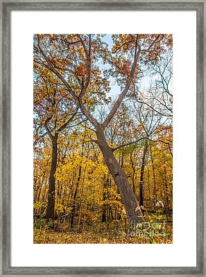 Stretching Out Framed Print by Andrew Slater