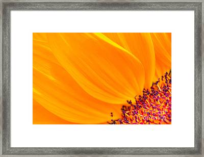 Framed Print featuring the photograph Stretching Out by Jim Carrell