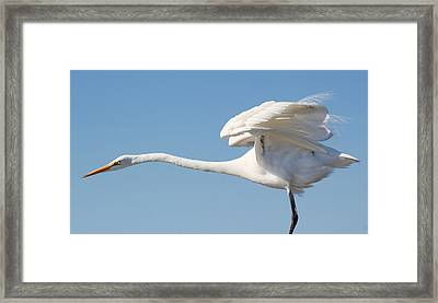 Stretching Out Framed Print by Paulette Thomas