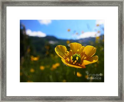 Stretching Towards The Sun Framed Print
