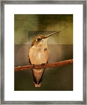 Strike A Hummingbird Pose Framed Print