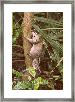Strike A Pose 2 Framed Print by Laurie Perry