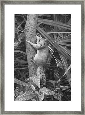 Strike A Pose Framed Print by Laurie Perry