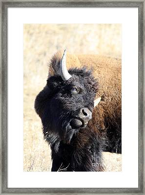 Strike A Pose Framed Print by Rick Rauzi